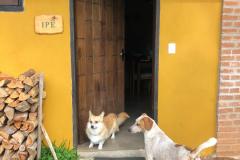 galeria_pet_friendly_novas11